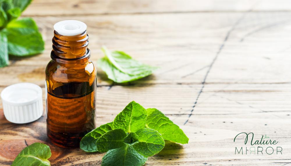 metol - borsmenta - ízületi gyulladás kezelése gyógynövényekkel